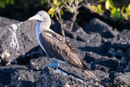 256 - Galápagos - 301017-9305