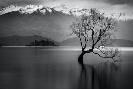 069 - Wanaka - 100518-0020-Edit - This is my take on that tree in Wanaka NZ.