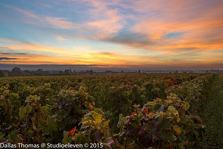 Sunrise over the vineyards - 1296-2