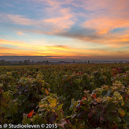 Sunrise over the vineyards - 1296-2
