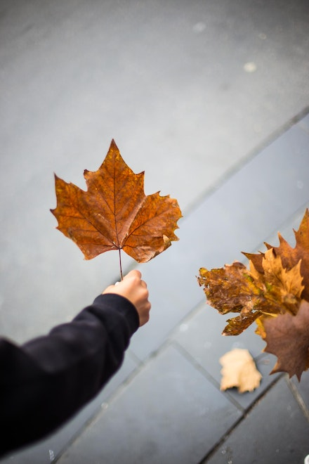 Leaf In Hand