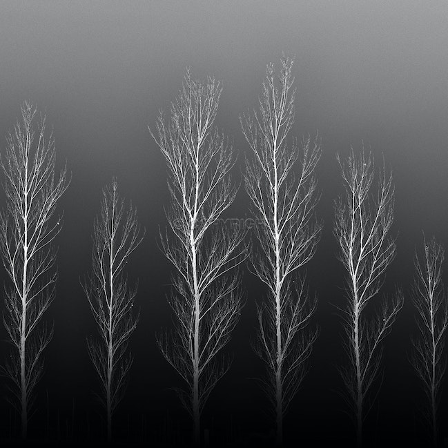 Skeletons - Trees in mid winter exude a simple beauty