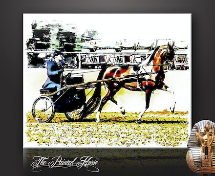 The Painted Horse - A coloured Arabian harness horse driven to a sulky, in a competition arena.