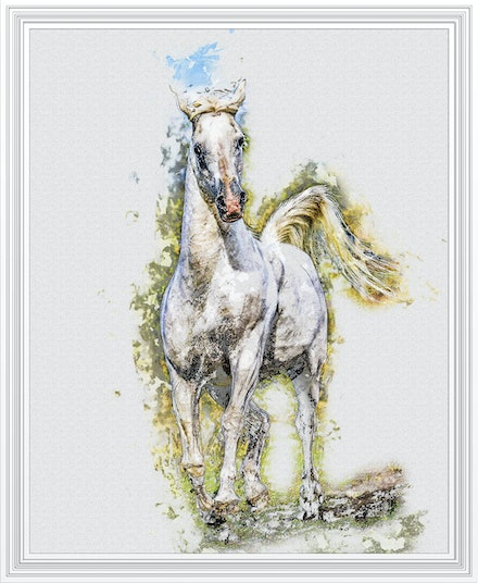 The Silver Stallion - Purebred Arabian stallion Silverwind Van Nina in pen and watercolour. Based on an image by Sharon Meyers.