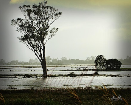 Flood - Flood waters recede after record levels in the January 2011 Lockyer Valley floods.