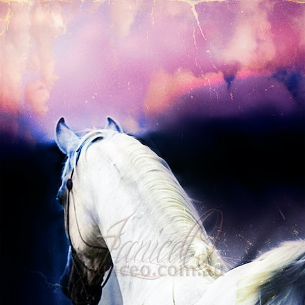 New Year 2 - Purebred Arabian white stallion, Silver Wind Van Nina. Digital painting based on a photo by Sharon Meyers Photography.