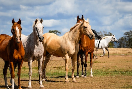 The Girls - Some of the mares of Comanche Lodge in their paddock. Image taken by Sharon Meyers, edited in Photoshop by Janice OConnor