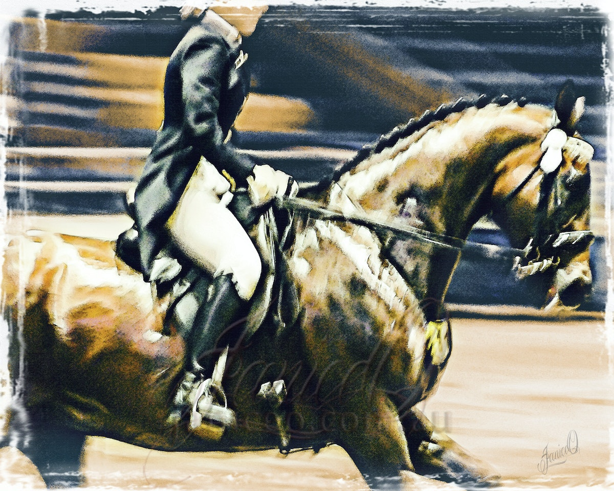 On the Bit - Thoroughbreds were once the only horse to have for dressage. These days they still present an elegant picture in the ring.