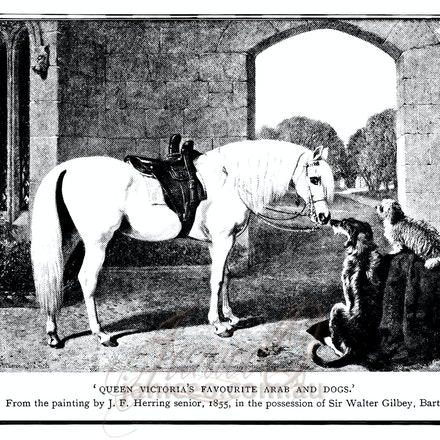 the_arab - This image is reproduced from a public domain publication, advertisement, or vintage print. It has been retouched.