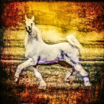 The King - The silver stallion, tall and proud, mount of kings.