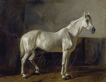 Grey Horse in Stable - Reproduction of a vintage work Rudolf Koller