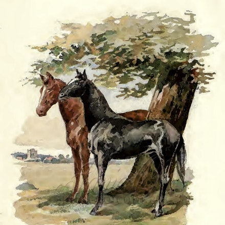 Black Beauty - Reproduction of the illustrations from the classic children's book, Black Beauty.
