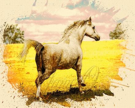 Run- Watercolour - Beautiful Arabian mare enjoying a gallop in the sun.
