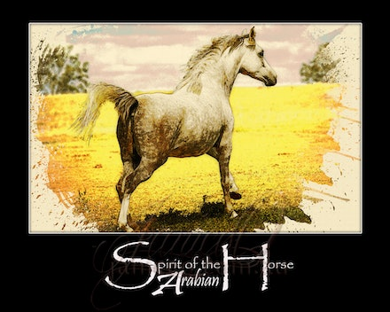Run Painted - Arabian mare enjoying a gallop in the sun. Inspirational wall art to brighten your home or office.