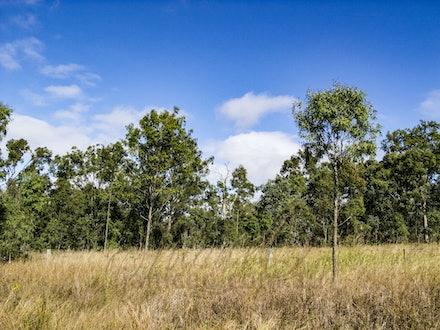 BlueSkies - Brilliant blue skies of early winter in southeast Queensland.