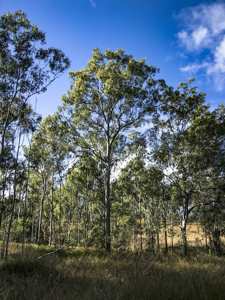Native bush - Trees reclaim the land.