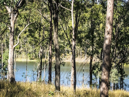 Through the Trees - In the midday sun. Winter days in south east Queensland.