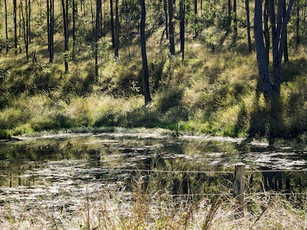 Reflections - The trunks of surrounding trees reflected on the lagoon surface.