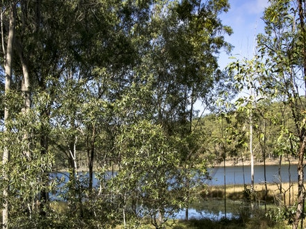 Gums by the Water - The native bush is reclaiming land that had beed feet under the waters of a flood.