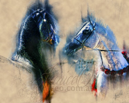 Black N White - Two Arabian stallions, face to face. Digital painting on brown paper.
