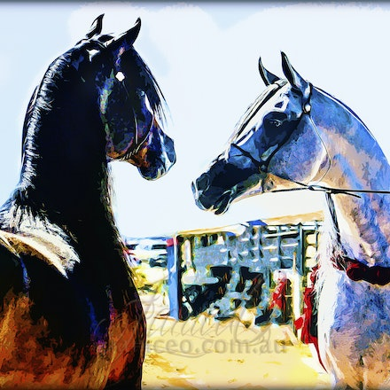 Challenge - Two Arabian stallions, face to face. Digital painting.