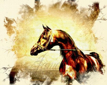 The Bay Stallion - Proud bay purebred Arabian stallion in oils.