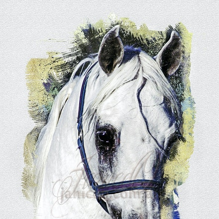 Art of the White Stallion - Ethereal dreams of childhood turned to reality in the body of a horse, lending wings to adulthood.