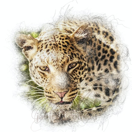 Who There - Leopards are well known for their cream and gold spotted fur, but some leopards have black fur with dark spots.