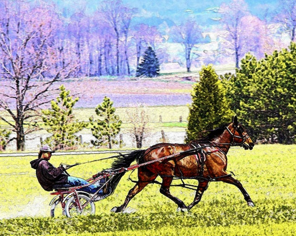 workout_paint - A harness racehorse being jogged on a track in a rural landsape.