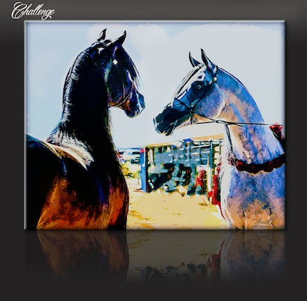 Challenge - A stretched canvas print of the work Challenge, a portrayal of two Arabian stallions facing off.