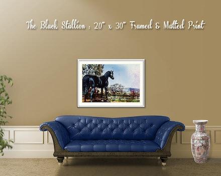 black_stallion_frame_room