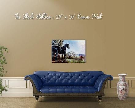 black_stallion_canvas_room