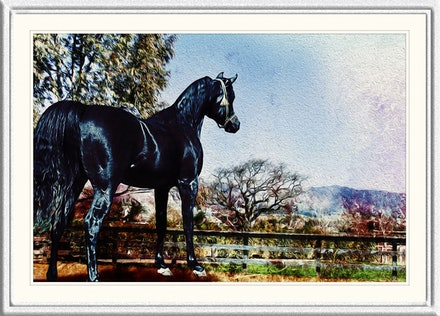 black_stallion_framed