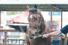 Magic Millions Spring Racehorse Sale