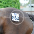 Magic Millions Spring Race Horse Sale 31 10 14 - Photos taken by Michael McInally