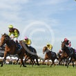 Crown Oaks Day 6 11 14 - Photos taken by Michael McInally  **Images not for sale**
