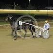 Race 8 Courageous Kiwi