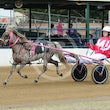 Ekka Mini Trots 15 08 15 - Photos taken by Michael McInally