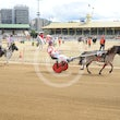 Ekka Mini Trots 16 08 15 - Photos taken by Michael McInally