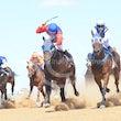 Race 3 Shantung Boxer