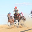 Race 6 Mugmarino