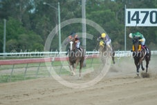 Race 2 Rustic Miss