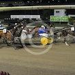Race 7 Gold Affair