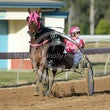 Gympie Harness 22 07 17 - Photos taken by Michael McInally