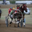 Race 8 Elzboy