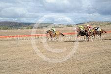 Race 1 Canid