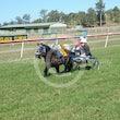 Mini Trots Race 1 Flying Frankie