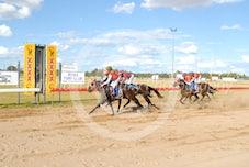 Race 5 Jacaranda Prince