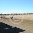 Race 2 Oliver Winkle