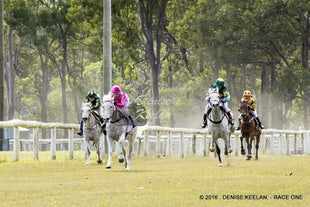 ARABIAN HORSE RACES